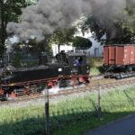 Döllnitzbahn Wilder Robert Dampflok in Oschatz