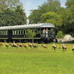 Aussichtsplattform des Rovos Rail - Zugreise Afrika