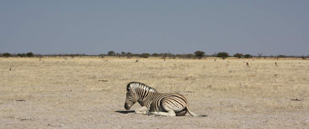 Zugreise Afrika - Etosha-Nationalpark - African Explorer und Rovos Rail