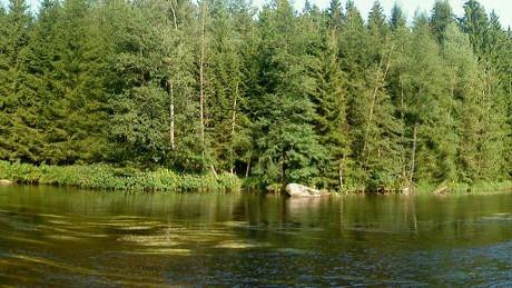Bayerischer Wald - Regen